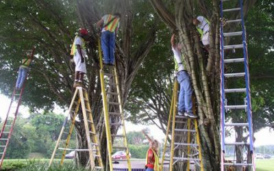 Starting a Professional Christmas Lighting Installation Business